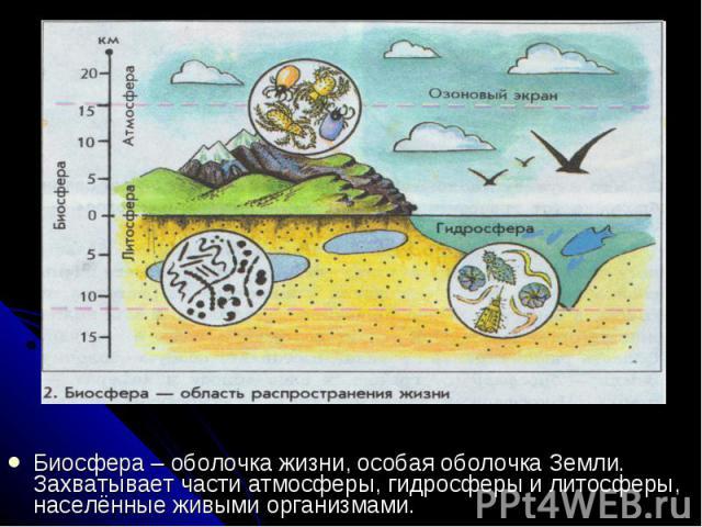 Биосфера – оболочка жизни, особая оболочка Земли. Захватывает части атмосферы, гидросферы и литосферы, населённые живыми организмами. Биосфера – оболочка жизни, особая оболочка Земли. Захватывает части атмосферы, гидросферы и литосферы, населённые ж…