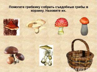 Помогите грибнику собрать съедобные грибы в корзину. Назовите их.