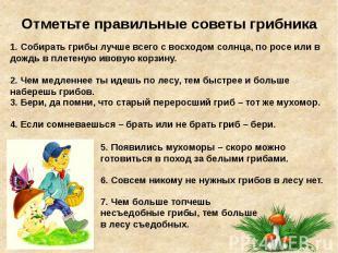 Отметьте правильные советы грибника
