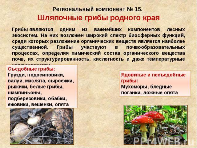 Региональный компонент № 15. Шляпочные грибы родного края