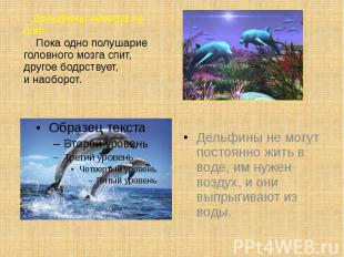 Дельфины никогда не спят. Пока одно полушарие головного мозга спит, другое бодрс