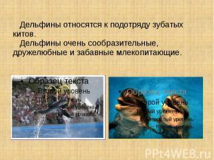 Дельфины относятся к подотряду зубатых китов. Дельфины очень сообразительные, др