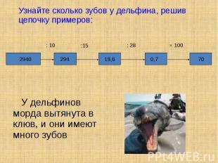 У дельфинов морда вытянута в клюв, и они имеют много зубов У дельфинов морда выт