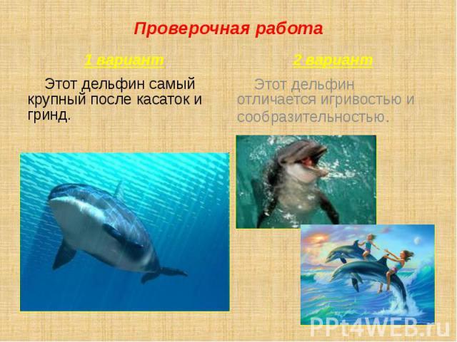 Проверочная работа 1 вариант Этот дельфин самый крупный после касаток и гринд.