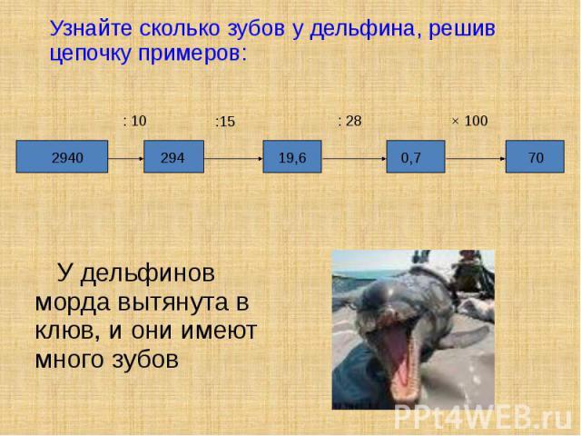 У дельфинов морда вытянута в клюв, и они имеют много зубов У дельфинов морда вытянута в клюв, и они имеют много зубов