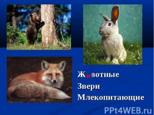 Животные Животные Звери Млекопитающие