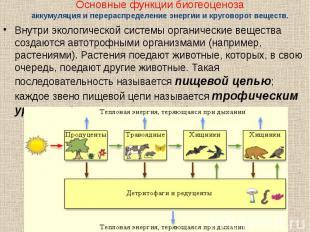 Внутри экологической системы органические вещества создаются автотрофными органи