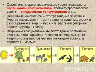 Организмы второго трофического уровня называются первичными консументами, третье