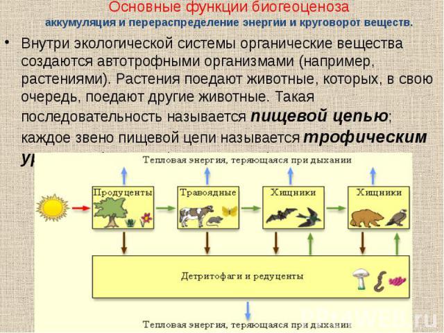 Внутри экологической системы органические вещества создаются автотрофными организмами (например, растениями). Растения поедают животные, которых, в свою очередь, поедают другие животные. Такая последовательность называется пищевой цепью; каждое звен…
