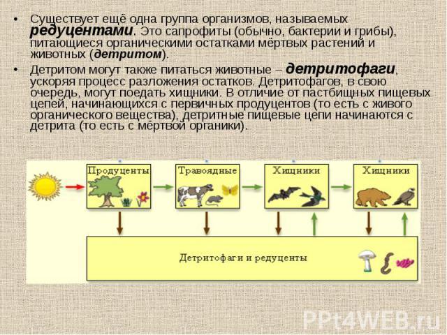 Существует ещё одна группа организмов, называемых редуцентами. Это сапрофиты (обычно, бактерии и грибы), питающиеся органическими остатками мёртвых растений и животных (детритом). Существует ещё одна группа организмов, называемых редуцентами. Это са…