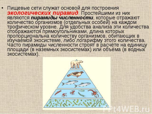 Пищевые сети служат основой для построения экологических пирамид. Простейшими из них являются пирамиды численности, которые отражают количество организмов (отдельных особей) на каждом трофическом уровне. Для удобства анализа эти количества отображаю…