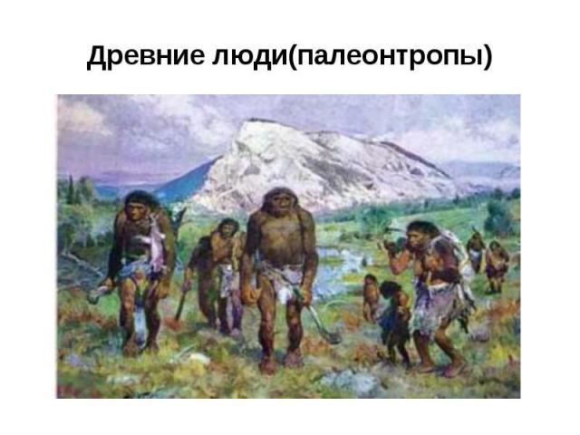 Древние люди(палеонтропы)