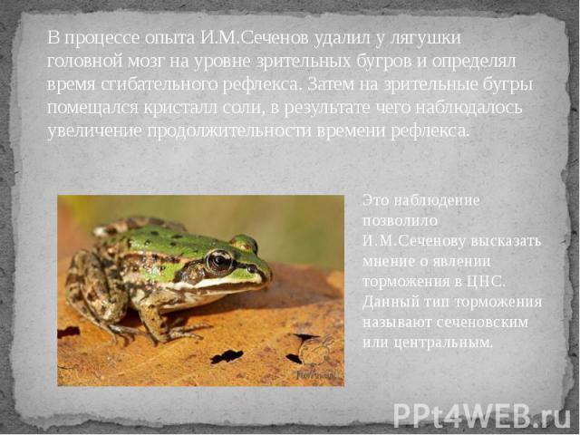 В процессе опыта И.М.Сеченов удалил у лягушки головной мозг на уровне зрительных бугров и определял время сгибательного рефлекса. Затем на зрительные бугры помещался кристалл соли, в результате чего наблюдалось увеличение продолжительности времени р…