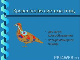 Кровеносная система птиц два круга кровообращения четырёхкамерное сердце