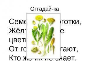 Отгадай-ка Семена, как коготки, Жёлто-красные цветки. От горла помогают, Кто же