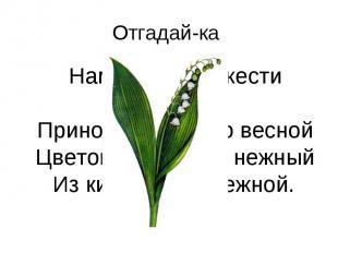 Отгадай-ка Нам запах свежести лесной Приносит позднею весной Цветок душистый, не