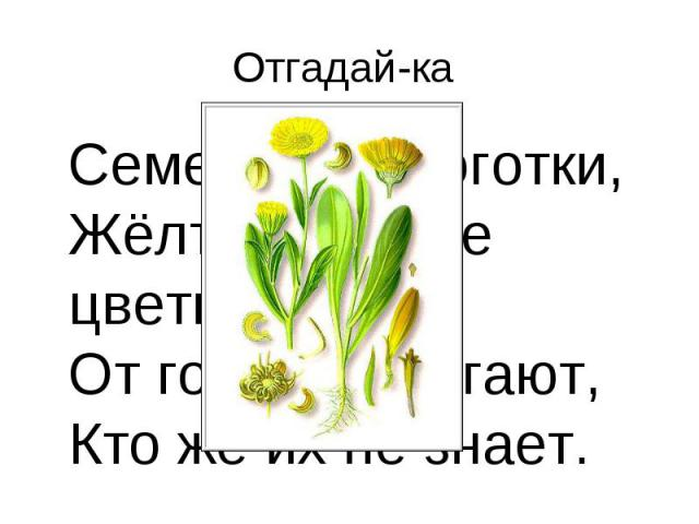 Отгадай-ка Семена, как коготки, Жёлто-красные цветки. От горла помогают, Кто же их не знает.