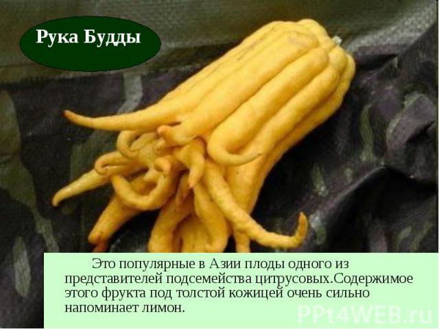 Это популярные в Азии плоды одного из представителей подсемейства цитрусовых.Содержимое этого фрукта под толстой кожицей очень сильно напоминает лимон.