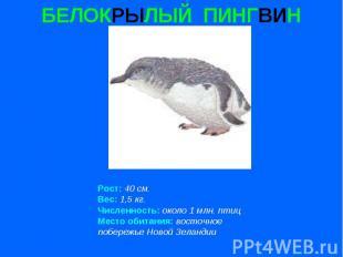 БЕЛОКРЫЛЫЙ ПИНГВИН Рост: 40 см. Вес: 1,5 кг. Численность: около 1 млн. птиц Мест
