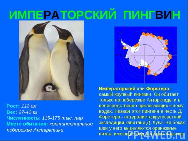 ИМПЕРАТОРСКИЙ ПИНГВИН Рост: 112 см. Вес: 27-40 кг. Численность: 135-175 тыс. пар Место обитания: континентальное побережье Антарктики