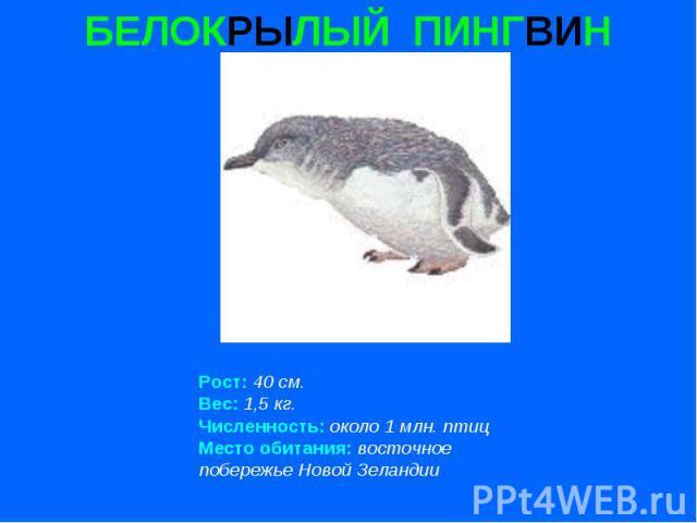БЕЛОКРЫЛЫЙ ПИНГВИН Рост: 40 см. Вес: 1,5 кг. Численность: около 1 млн. птиц Место обитания: восточное побережье Новой Зеландии