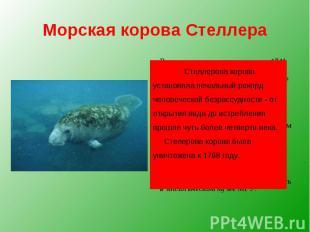 Морская корова Стеллера Впервые это животное открыл в 1741 году Георг Стеллер. М