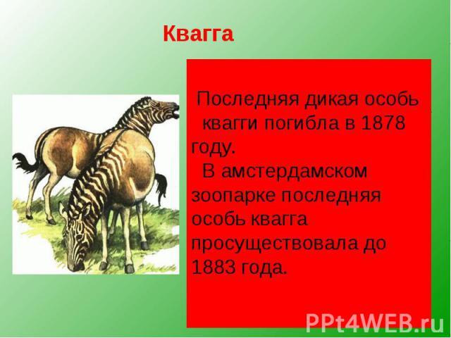 Квагга, обитавшая на юге Африки, была удивительным парнокопытным. Спереди она имела полосатую расцветку, как у зебры, сзади — гнедой окрас лошади. Квагга, обитавшая на юге Африки, была удивительным парнокопытным. Спереди она имела полосатую расцветк…