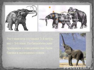 Рост мамонта составлял 3-4 метра, вес – 5-6 тонн. По биологическим признакам и п