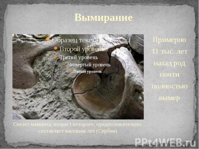 Вымирание Скелет мамонта, возраст которого, предположительно, составляет миллион лет (Сербия)