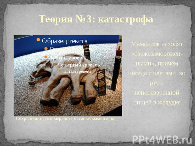 Теория №3: катастрофа Сохранившиеся в мерзлоте останки мамонтёнка