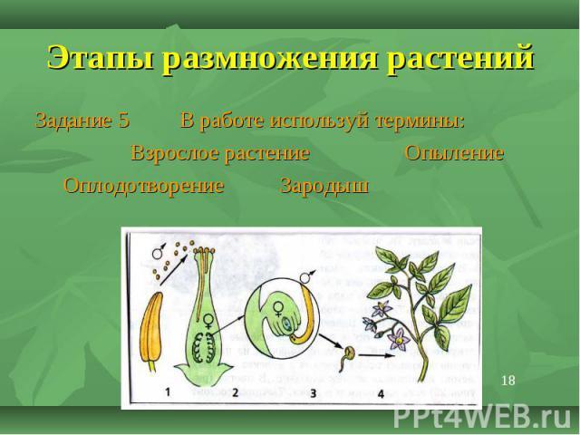 Задание 5 В работе используй термины: Задание 5 В работе используй термины: Взрослое растение Опыление Оплодотворение Зародыш