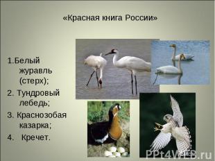 1.Белый журавль (стерх); 1.Белый журавль (стерх); 2. Тундровый лебедь; 3. Красно