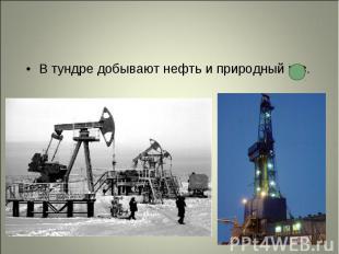 В тундре добывают нефть и природный газ. В тундре добывают нефть и природный газ