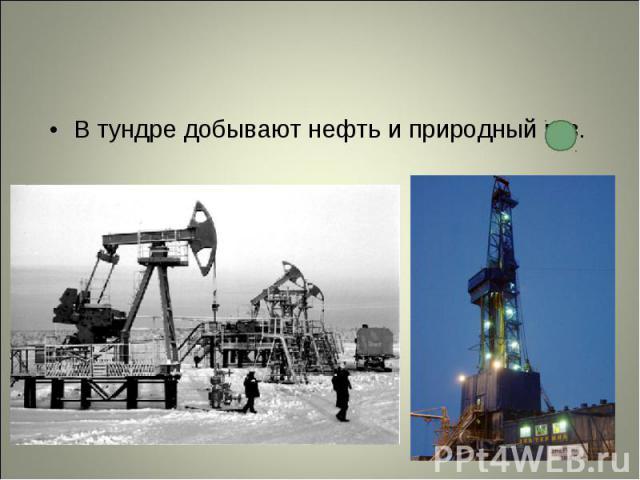 В тундре добывают нефть и природный газ. В тундре добывают нефть и природный газ.