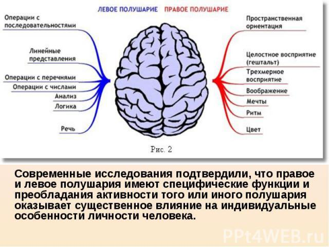 Современные исследования подтвердили, что правое и левое полушария имеют специфические функции и преобладания активности того или иного полушария оказывает существенное влияние на индивидуальные особенности личности человека. Современные исследовани…
