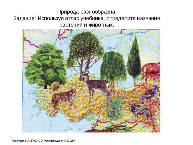 Природа разнообразна. Задание: Используя атлас учебника, определите название растений и животных.