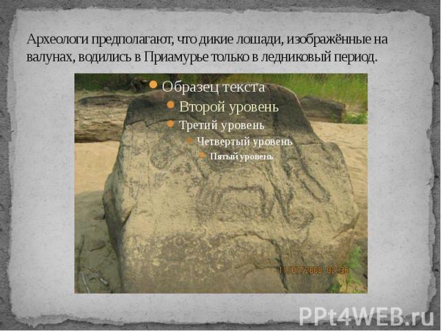 Археологи предполагают, что дикие лошади, изображённые на валунах, водились в Приамурье только в ледниковый период.
