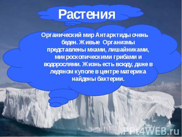 Органический мир Антарктиды очень беден. Живые Организмы представлены мхами, лишайниками, микроскопическими грибами и водорослями. Жизнь есть всюду, даже в ледяном куполе в центре материка найдены бактерии. Органический мир Антарктиды очень беден. Ж…