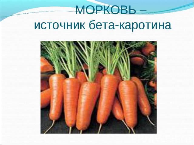 МОРКОВЬ – источник бета-каротина