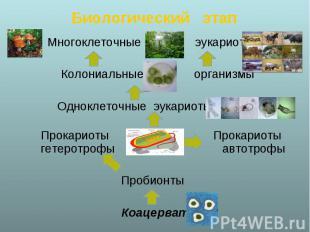 Многоклеточные эукариоты Многоклеточные эукариоты Колониальные организмы Однокле