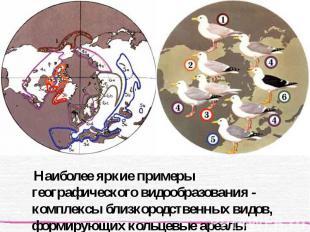 Наиболее яркие примеры географического видообразования - комплексы близкородстве