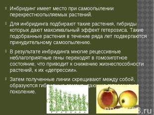 Инбридинг имеет место при самоопылении перекрестноопыляемых растений. Инбридинг