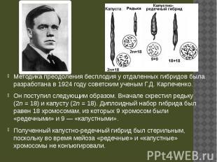 Методика преодоления бесплодия у отдаленных гибридов была разработана в 1924 год