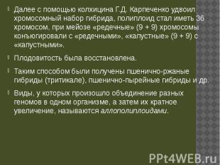 Далее с помощью колхицина Г.Д. Карпеченко удвоил хромосомный набор гибрида, поли