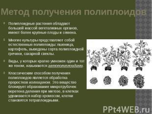 Метод получения полиплоидов Полиплоидные растения обладают большей массой вегета