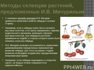 Методы селекции растений, предложенные И.В. Мичуриным С помощью метода ментора И