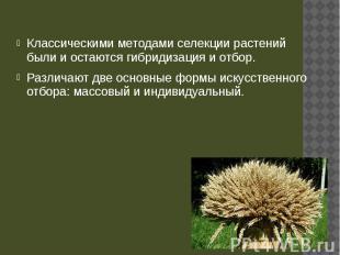 Классическими методами селекции растений были и остаются гибридизация и отбор. К
