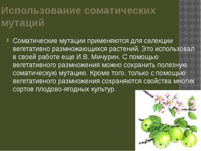 Использование соматических мутаций Соматические мутации применяются для селекции вегетативно размножающихся растений. Это использовал в своей работе еще И.В. Мичурин. С помощью вегетативного размножения можно сохранить полезную соматическую мутацию.…