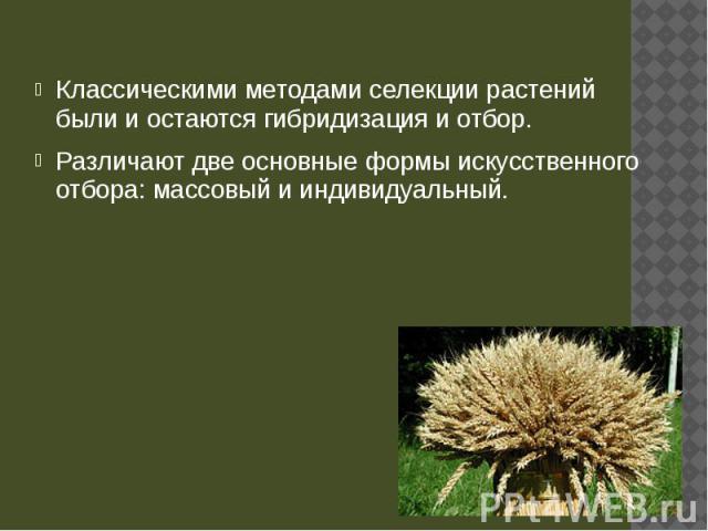 Классическими методами селекции растений были и остаются гибридизация и отбор. Классическими методами селекции растений были и остаются гибридизация и отбор. Различают две основные формы искусственного отбора: массовый и индивидуальный.
