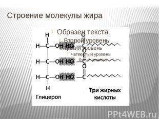 Строение молекулы жира